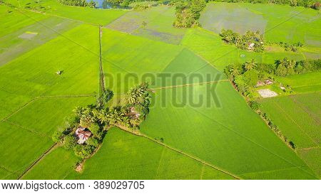 Tropical Landscape With Farmland And Rice Fields, Aerial Drone. Philippines, Mindanao. Rice Fields I