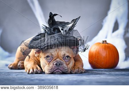 Red Fawn French Bulldog Dog Dressed Up With Halloween Witch Hat In Front Of Seasonal Background With