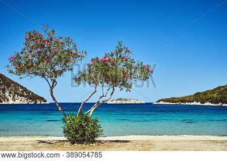 A Deciduous Tree On A Sandy Beach On The Island Of Kefalonia In Greece