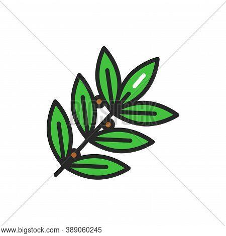 Bay Leaf Color Line Icon. Product. Vector Illustration