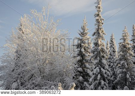 The Tops Of Trees In Frost On The Background Of Sky, Winter Cold, Trees, Frost, Snow Sunset, Snow, I