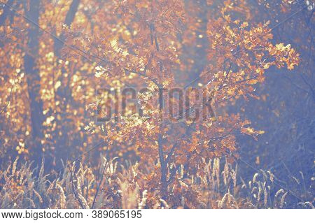 Golden Forest. Soft Focus Blurred Background Image Of Sunset In Forest. Autumn Rural Landscape With