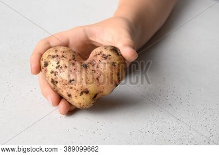 Abnormal Potato In Shape Of Heart In Child Hand On White Background. Concept Love Organic Natural Ho