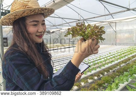 Young Farmer Woman Checking Fresh Lettuce Organic Vegetable With Basket At Greenhouse Hydroponic Org
