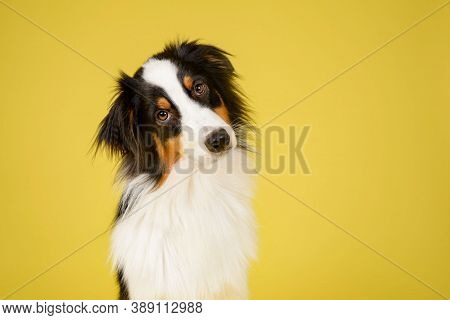 Dog On Street. Close Up Of Dog. Cute And Beautiful Dog. City Dog Life.