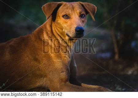 Dog On Street. Small And Big Dog On Street. Close Up Of Dog. Cute Little Dog Portrait. Beautiful Dog