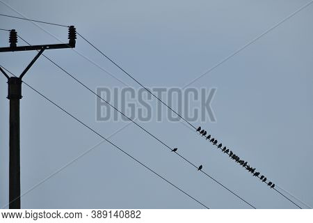 Black Silhouette Of A Thrush Bird On A Wire Electric Pole In The Blue Sky