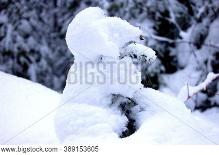 Snow Figure In The Forest, Snow, Snowdrifts, Trees Covered With Snow, Frost, Winter