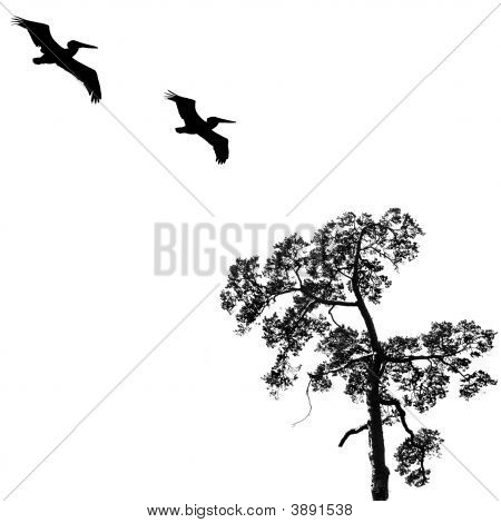 Black Tree And Birds Background