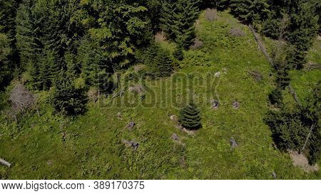 Topview Of The Meadow In Green Forest. Pinewood With Small Fir-tree In The Middle.