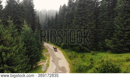 Topview Of Horse Carriage. Cart With Horse Riders Is Driving Through The Coniferous Forest.