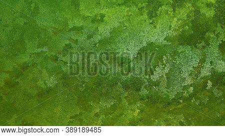 Abstract Dark Green Background. Frost On Window Glass In Winter Close-up. The Pattern Is Similar To