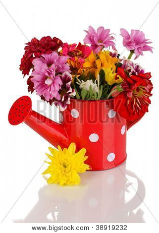 Red watering can of peas with flowers isolated on white