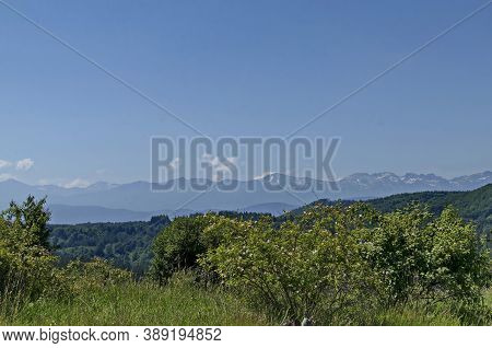 Beautiful Landscape Of Summer Nature With Green Glade And Forest In  Plana Mountain Toward Rila Moun
