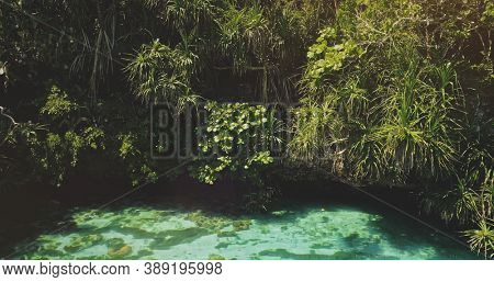 Closeup tropic trees leaves over emerald lake with corals of Weekuri attraction, Wild Sumba Island, Indonesia, Asia. Wonderful landscape of salt water in jade color with exotic plants in zoom shot