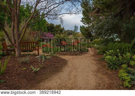 Davis; California; Usa. November 28, 2019. Path To A Garden With Aloe,  Redbud  And Other Flowers At