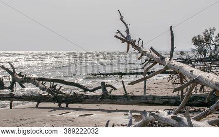 Wild Desert Beach With Fallen Trees. Cape Kolka Latvia.