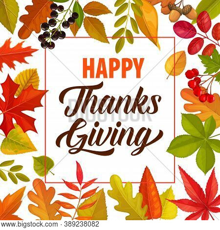 Happy Thanks Giving Vector Frame With Lettering And Fallen Autumn Leaves Or Berries. Thanksgiving Da