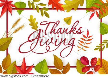 Thanks Giving Vector Poster Or Greeting Card With Lettering And Fallen Autumn Leaves And Wheat Ears.