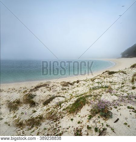 Rodas Beach In The Cies Islands On A Foggy Morning With Turquoise Water And Dunes With Small Purple