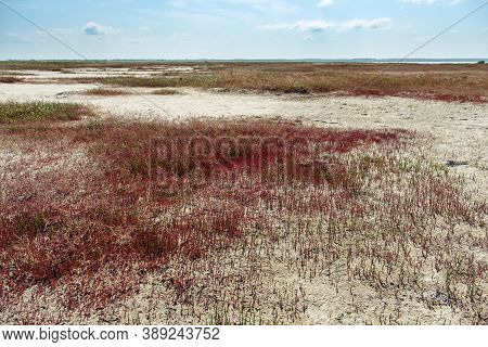 Shore Of Lake Ebeyty With Red Grass Ground Cover, Therapeutic Mud, Salt Lake In Omsk Region Russia.