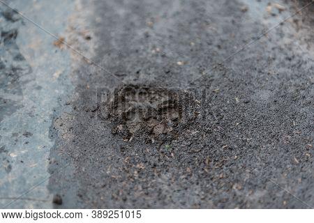 Dog Footprint. Dog Footprint In The Mud. Dog Paw Print. Pet. Favorite Pet. Walking The Dog. Walking
