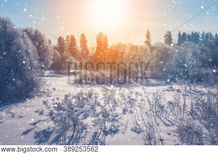 Winter Christmas Scenic Landscape. White  Branches In Rime, Falling Snow, Snow Drifts In On Nature,