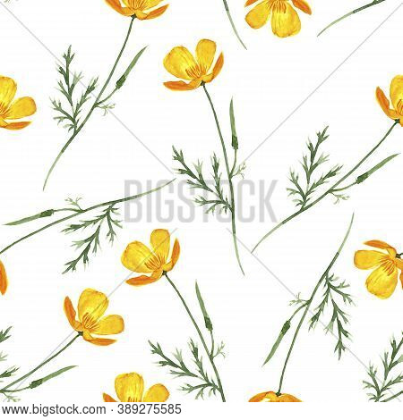 Seamless Pattern With Watercolor Drawing Californian Poppy Flowers, Eschscholzia Californica, Hand D