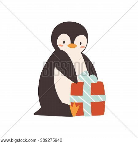 Cute Penguin Sitting With Wrapped Gift Box Vector Flat Illustration. Funny Baby Polar Bird Holding P