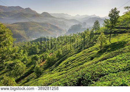 Tea plantations in Munnar at early morning in Kerala, India