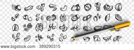 Nuts Doodle Set. Collection Of Hand Drawn Sketche Templates Patterns Of Almond Cashews Macadamia Pea