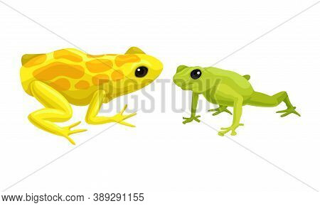 Frog As Short-bodied And Tailless Amphibians Vector Set