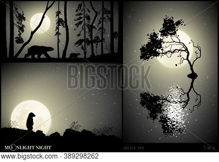 Bears Family Walking In Forest On Moonlight Night. Animal Mother And Baby Silhouettes. Little Bear A