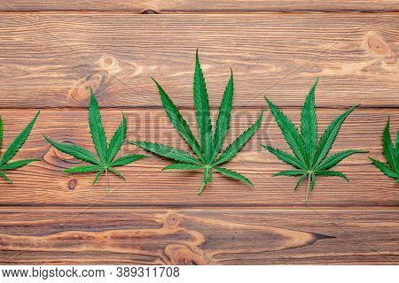 Cannabis Leaf Weed Ganja Green Hemp Leaves On Dark Brown Wooden Background. Medical Marijuana Plant