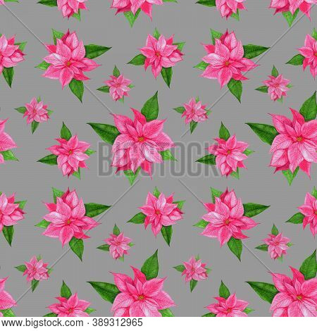 Christmas Poinsettia Pink Flower.christmas Pattern With Watercolor Pink Poinsettia On A Gray Backgro
