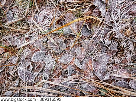 Leaves And Grass Covered In Rime. Frozen Autumn Background.