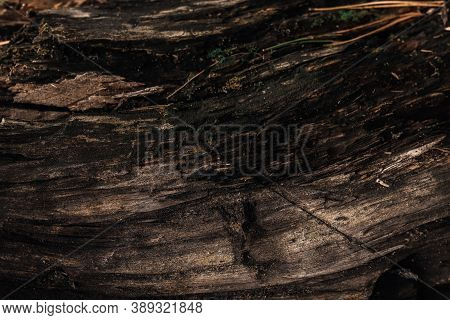 Old And Black Decrepit Wood In Forest, Detailed Background Photo Texture. Dark Wooden Surface Close