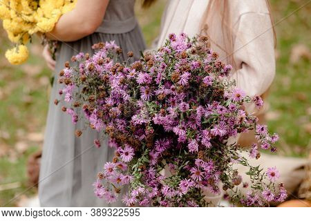 Beautiful Girl Holding A Bouquet Of Purple Chrysanthemum Flowers. A Woman Holds A Beautiful Blooming
