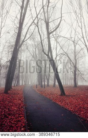 Fall alley in the foggy November park. Fall landscape in foggy fall weather, fall foggy view. November fall background, fall alley in the city fall park. Fall street in the foggy weather