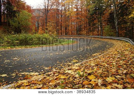 Forest way  at autumn time, Czech republic, mountains Jesenik