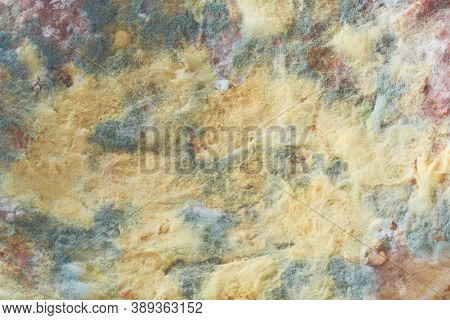 Food Mold Fungus. Abstract Background With Copy Space. Background Of Colony Characteristics Of Fungu