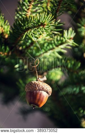 Natural Christmas Decoration Made From Brown Acorn Hanging On Green Coniferous Spruce Tree