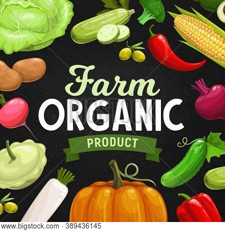 Farm Organic Vegetables And Greenery Banner. Farmer Vegetables Harvest, Fresh Organic Veggies. Cabba