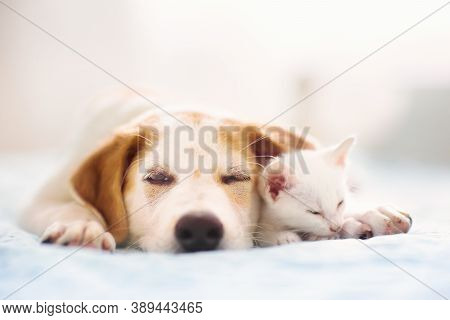Cat And Dog Sleeping Together. Kitten And Puppy Taking Nap. Home Pets. Animal Care. Love And Friends
