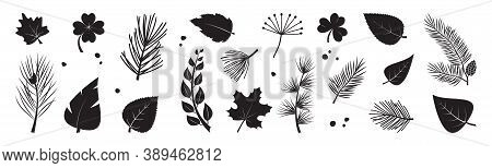 Leaf Tree Vector Icon, Plant Black Silhouettes, Fir And Pine Cone, Evergreen, Leaves Different Shape