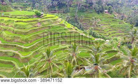 Provide Beautiful Scenes Of Rice Paddies And Their Innovative Irrigation System. Known As The Subak,