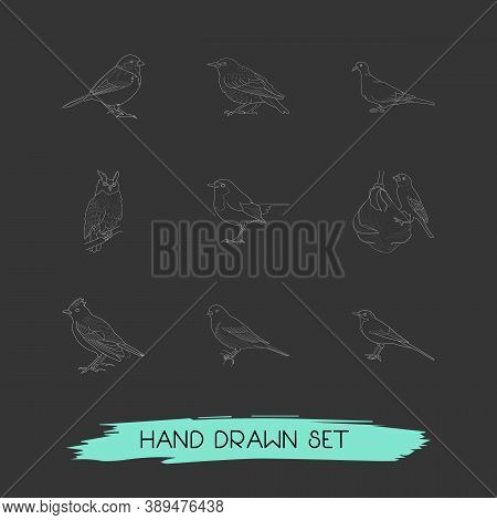 Set Of Birds Icons Line Style Symbols With Sparrow, Wagtail, Dove And Other Icons For Your Web Mobil