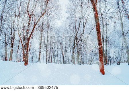 Winter landscape with falling snow, winter forest with snowfall over winter grove. Snowy winter scene, colorful winter landscape, winter forest, winter snowy nature view. Winter forest