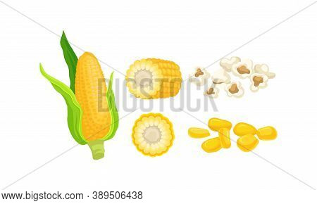 Maize Or Corn As Cereal Grain With Yellow Kernels Or Seeds Vector Set