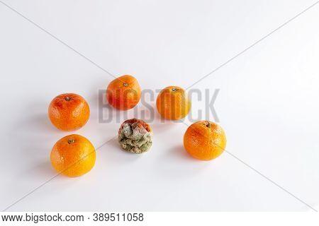 Moldy Rotten Orange Tangerine Surrounded Of Fresh Fruits On A White Background, Spoiled Fruit, Bad O